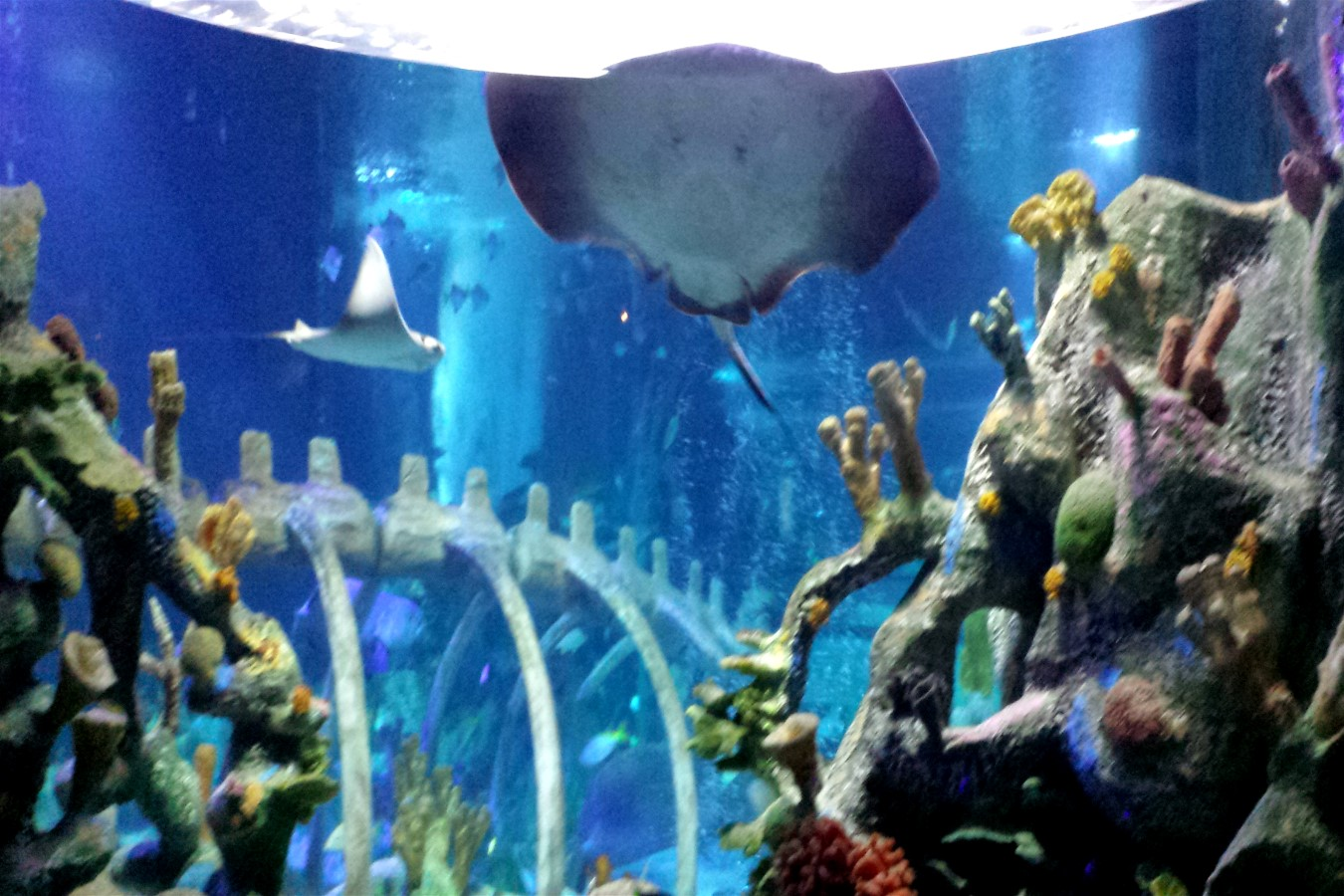 Sea Life Arizona Aquarium Review By Jamie Tomkins