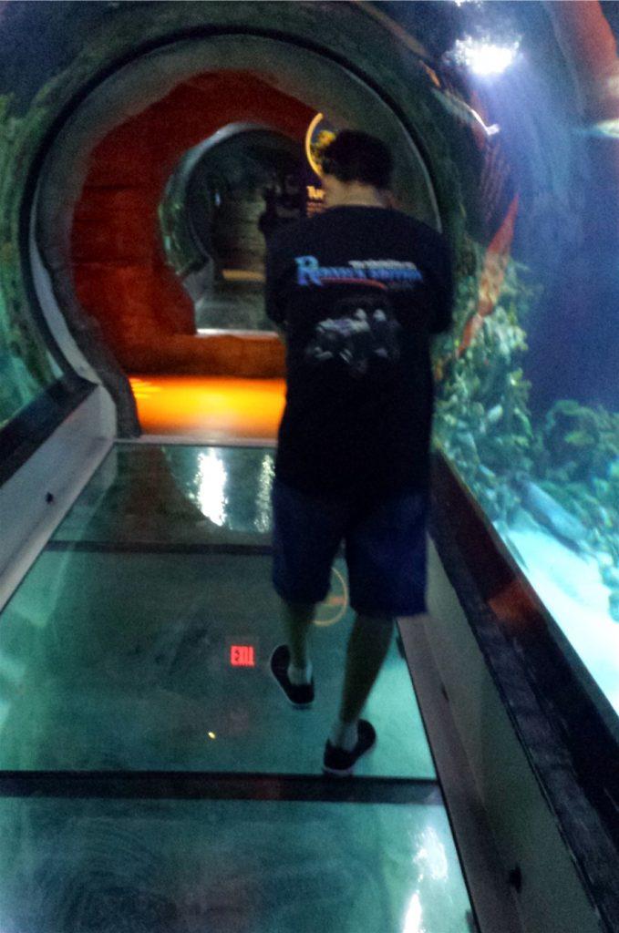 experience sea life