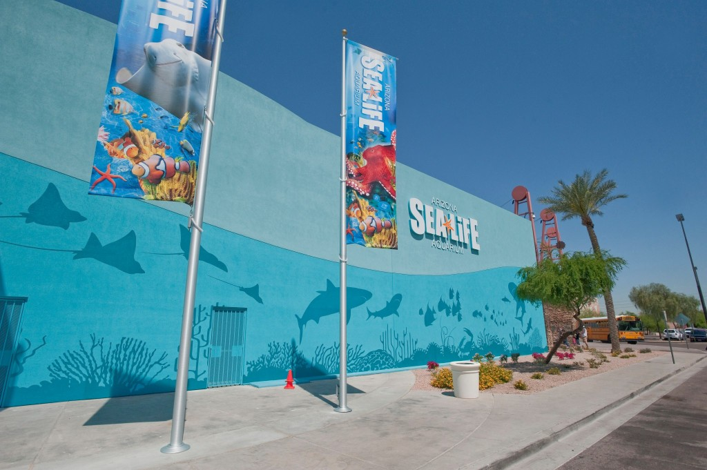 Experience Sea Life In The Desert Tigerstrypesblog
